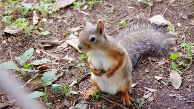 Squirrel With Big Boobs Goes Viral, View Pic of Voluptuous Squirrel From a Zoo in Japan